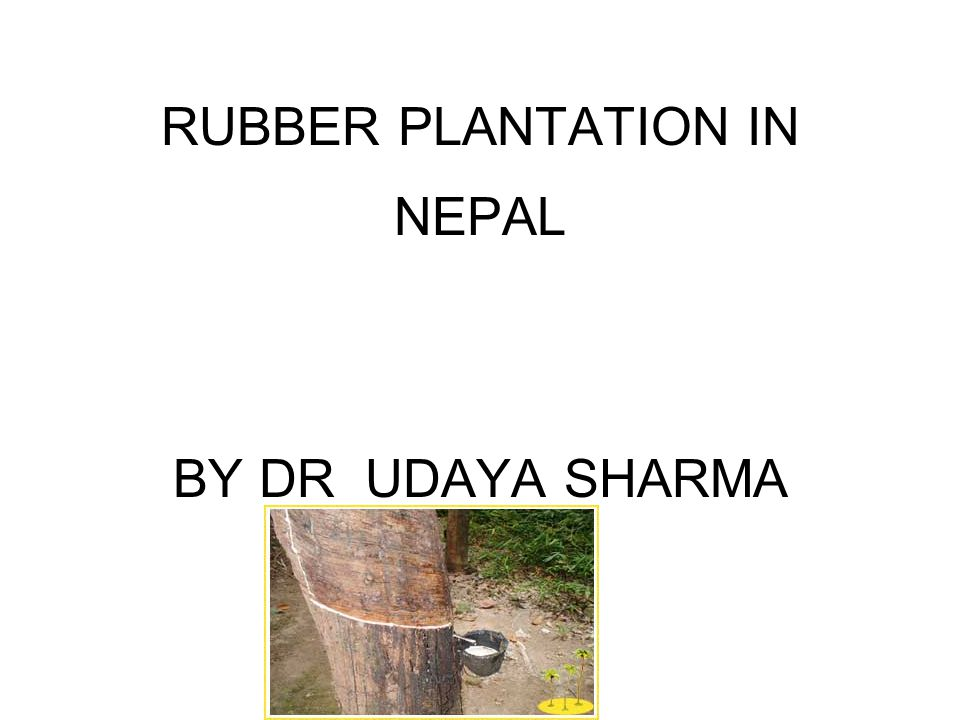RUBBER PLANTATION IN NEPAL BY DR UDAYA SHARMA
