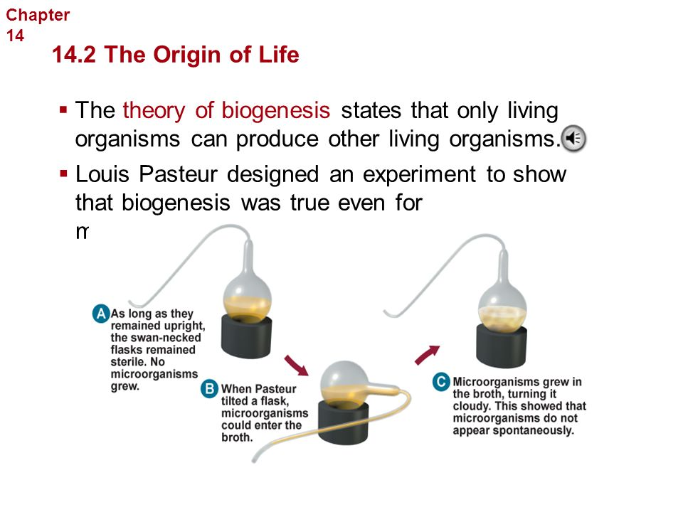 Chapter 14The History of Life. 14.2 The Origin of Life.