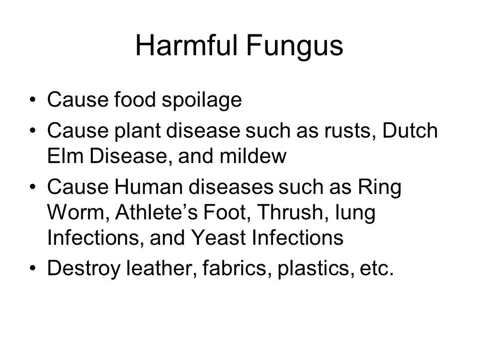 Harmful Fungus Cause food spoilage