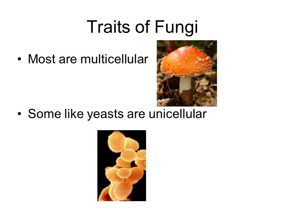 Traits of Fungi Most are multicellular