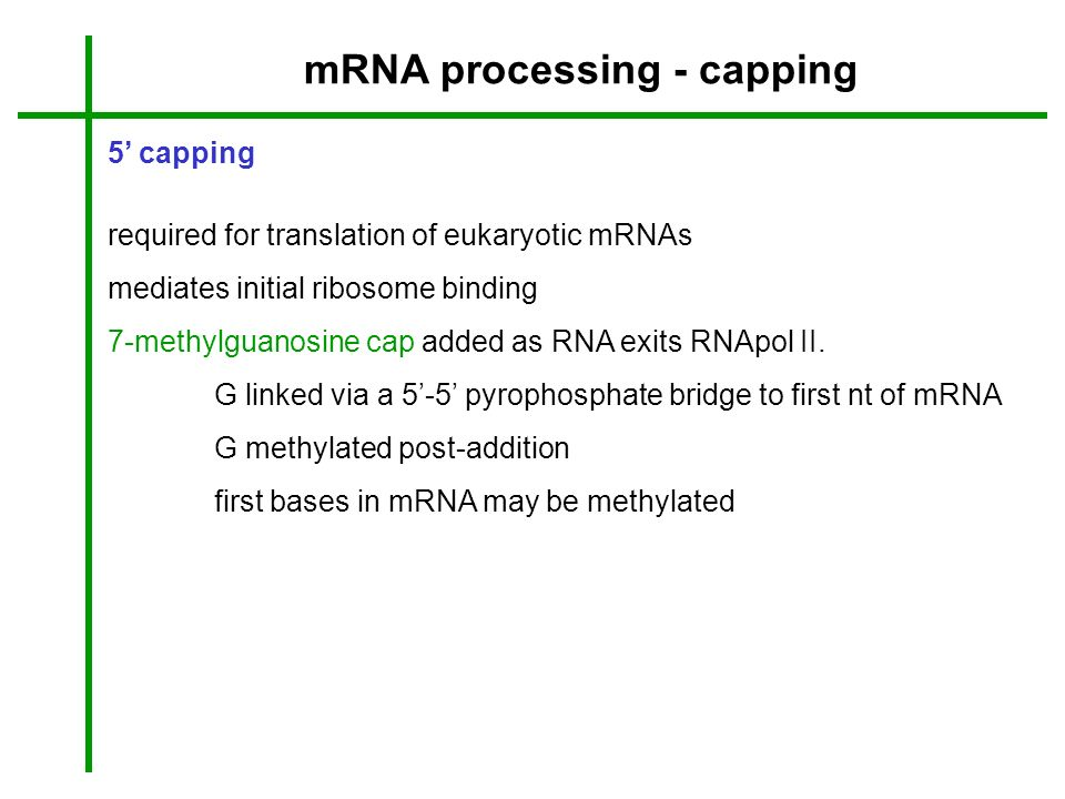 mRNA processing - capping