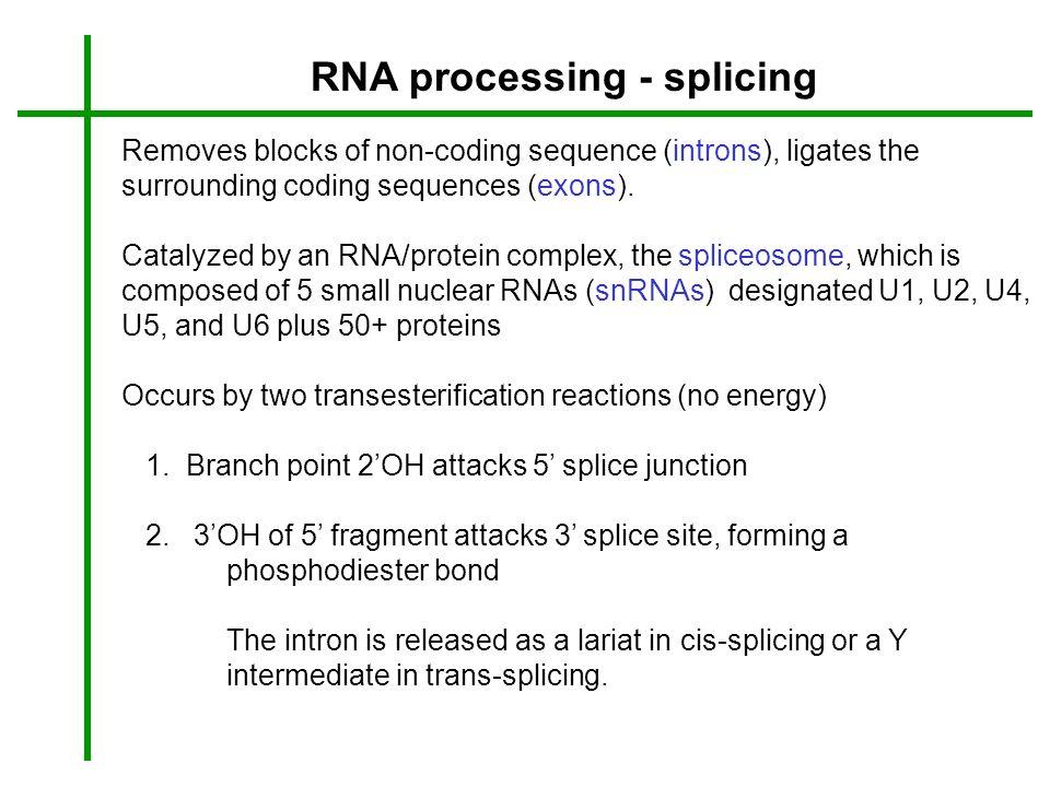 RNA processing - splicing