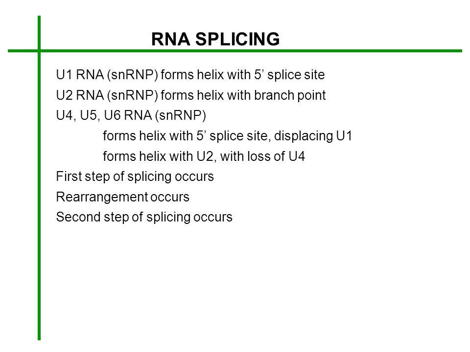 RNA SPLICING U1 RNA (snRNP) forms helix with 5' splice site