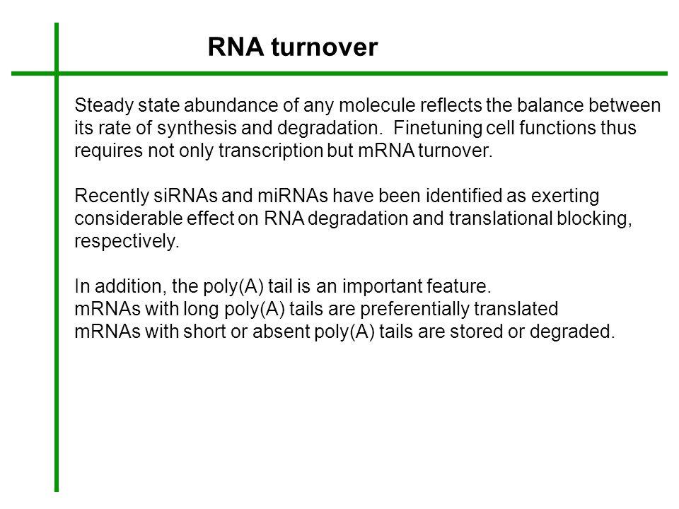 RNA turnover