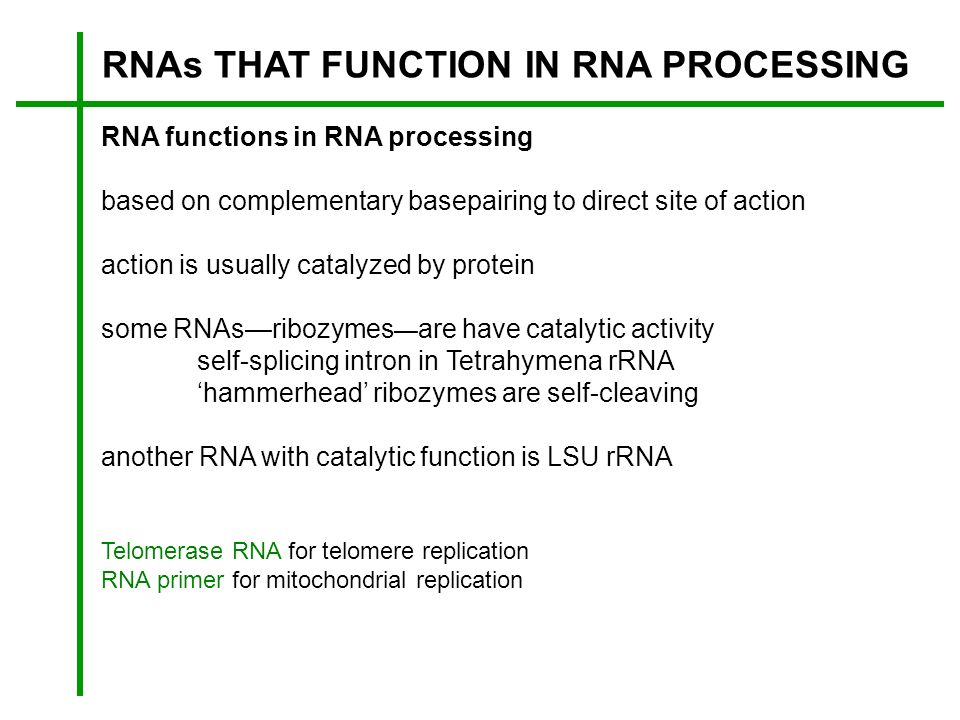 RNAs THAT FUNCTION IN RNA PROCESSING