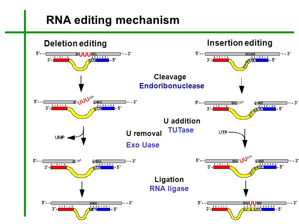 RNA editing mechanism Deletion editing Insertion editing Cleavage