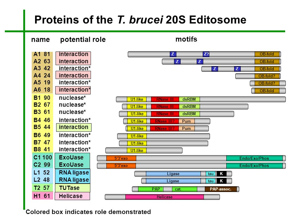 Proteins of the T. brucei 20S Editosome