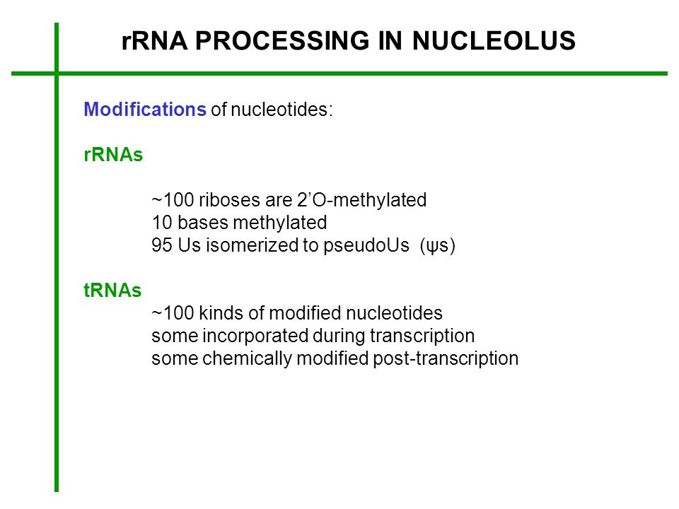 rRNA PROCESSING IN NUCLEOLUS