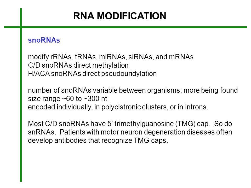 RNA MODIFICATION snoRNAs
