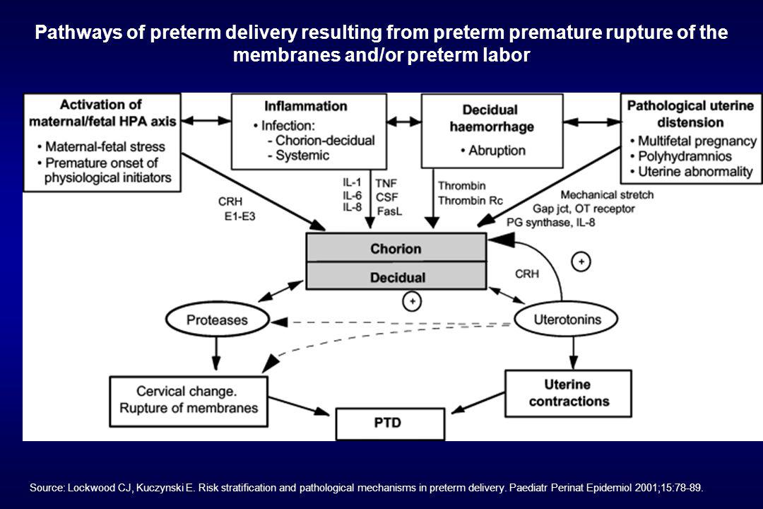 Pathways of preterm delivery resulting from preterm premature rupture of the membranes and/or preterm labor