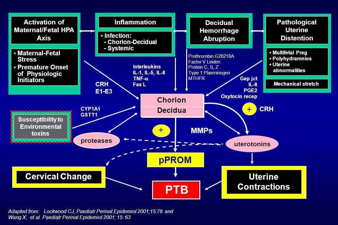 PTB pPROM Cervical Change Uterine Contractions Chorion Decidua + +