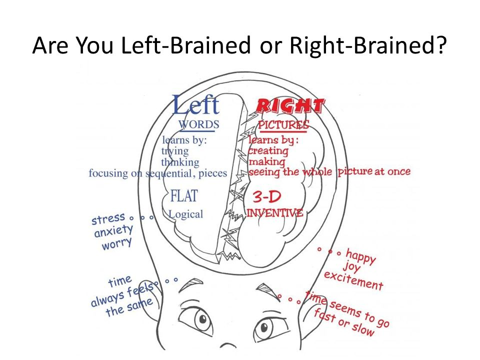 Are You Left-Brained or Right-Brained