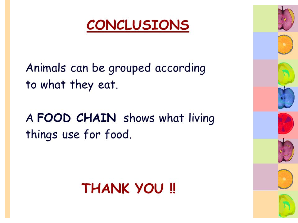 CONCLUSIONS THANK YOU !! Animals can be grouped according