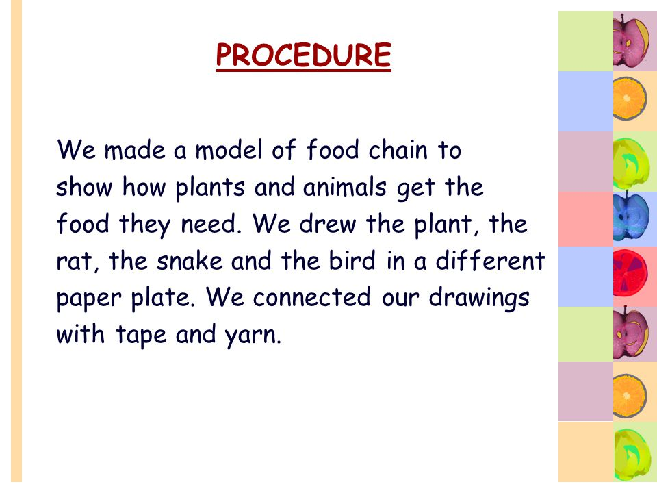 PROCEDURE We made a model of food chain to