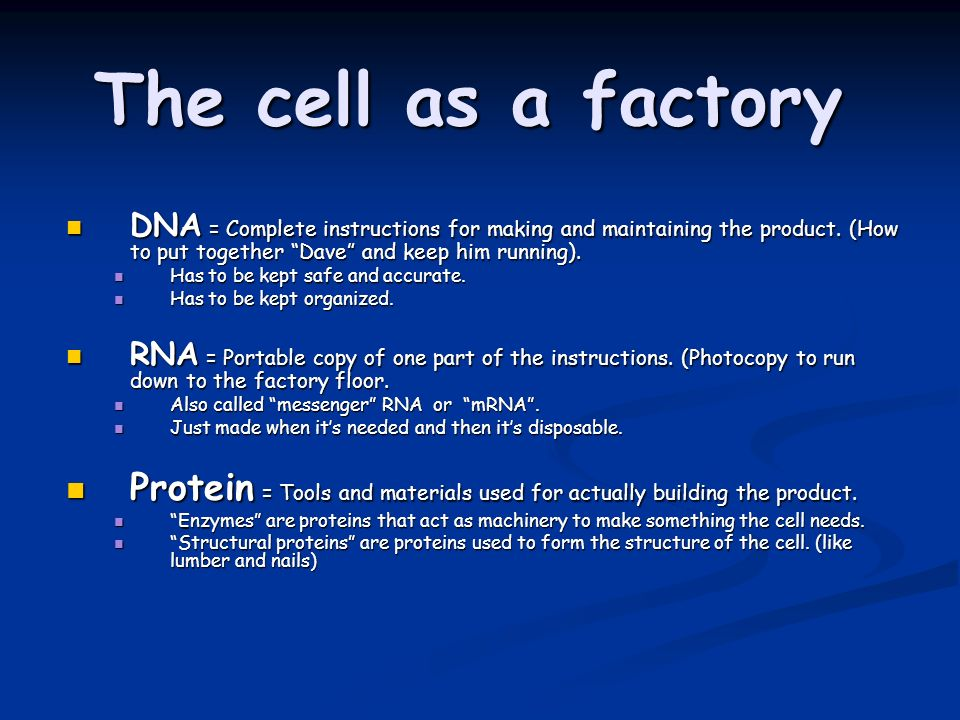 The cell as a factory DNA = Complete instructions for making and maintaining the product. (How to put together Dave and keep him running).