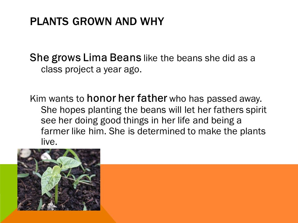 Plants grown and why She grows Lima Beans like the beans she did as a class project a year ago.