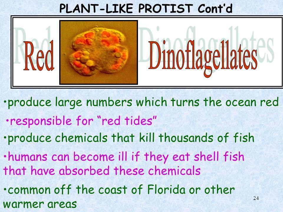 PLANT-LIKE PROTIST Cont'd