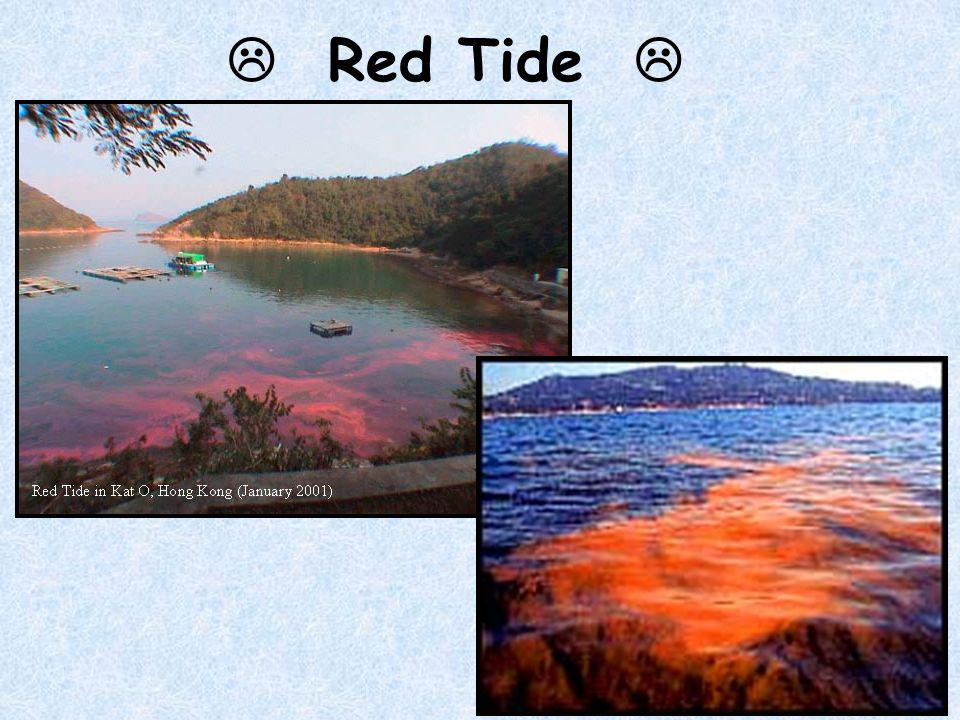  Red Tide  http://www.hku.hk/civil/dept_activities/eutrowrk/images/red_tide.jpg.