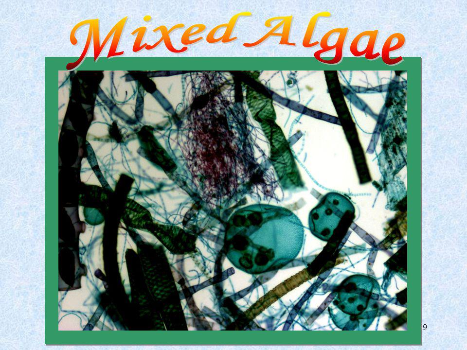 Mixed Algae