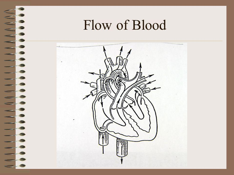Flow of Blood