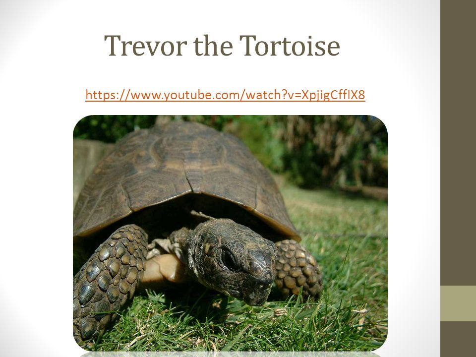 Trevor the Tortoise https://www.youtube.com/watch v=XpjigCffIX8
