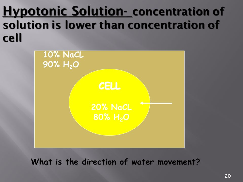 The Plasma Membrane 3/25/2017. Hypotonic Solution- concentration of solution is lower than concentration of cell.