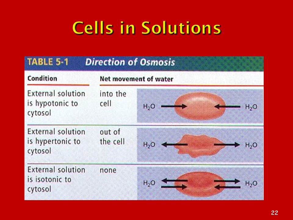 Cells in Solutions The Plasma Membrane 3/25/2017