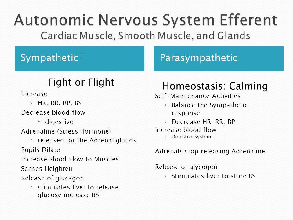 Autonomic Nervous System Efferent Cardiac Muscle, Smooth Muscle, and Glands