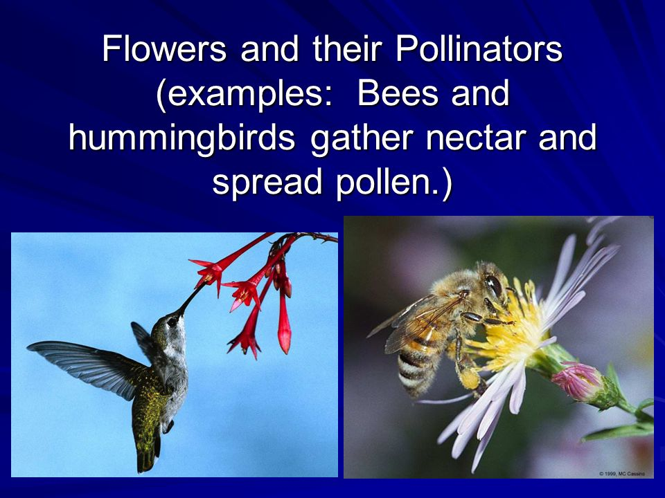 Flowers and their Pollinators (examples: Bees and hummingbirds gather nectar and spread pollen.)