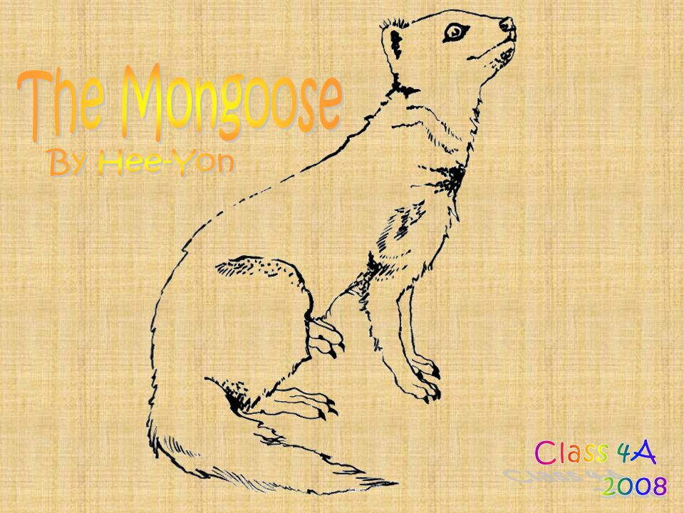 The Mongoose By Hee-Yon Class 4A 2008