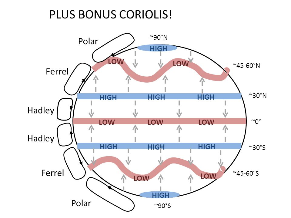 PLUS BONUS CORIOLIS! Polar Ferrel Hadley HIGH LOW ~90°N ~45-60°N ~30°N