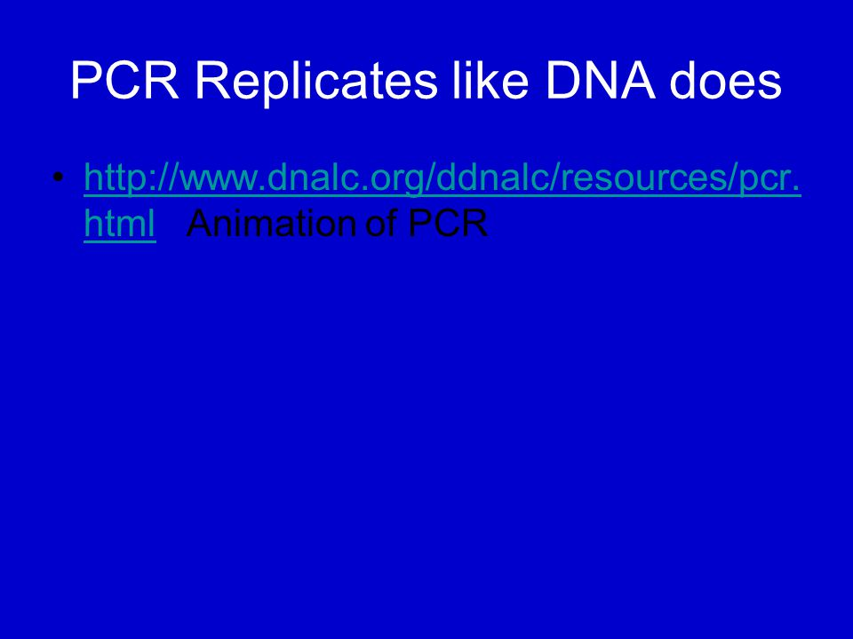 PCR Replicates like DNA does