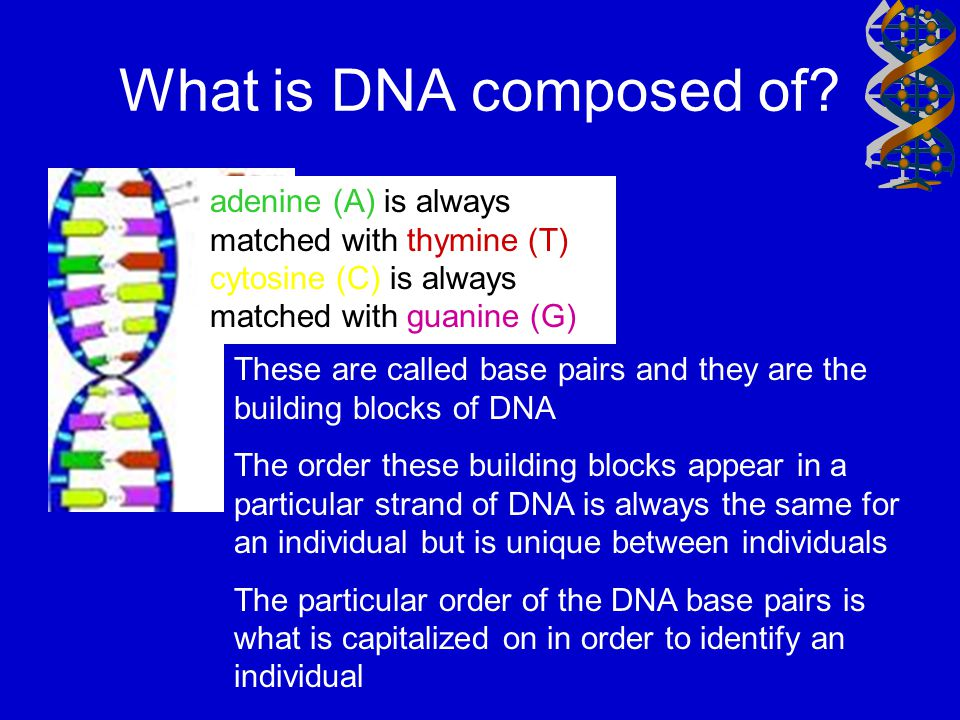 What is DNA composed of A. adenine (A) is always matched with thymine (T) cytosine (C) is always matched with guanine (G)