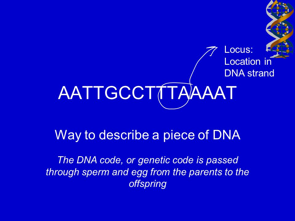 Way to describe a piece of DNA