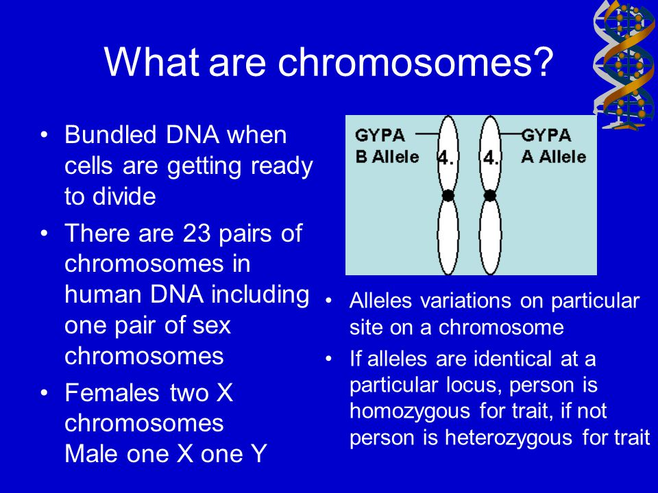 What are chromosomes Bundled DNA when cells are getting ready to divide.