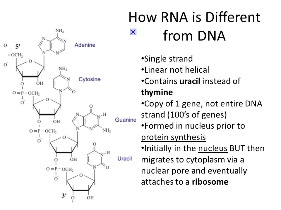 How RNA is Different from DNA