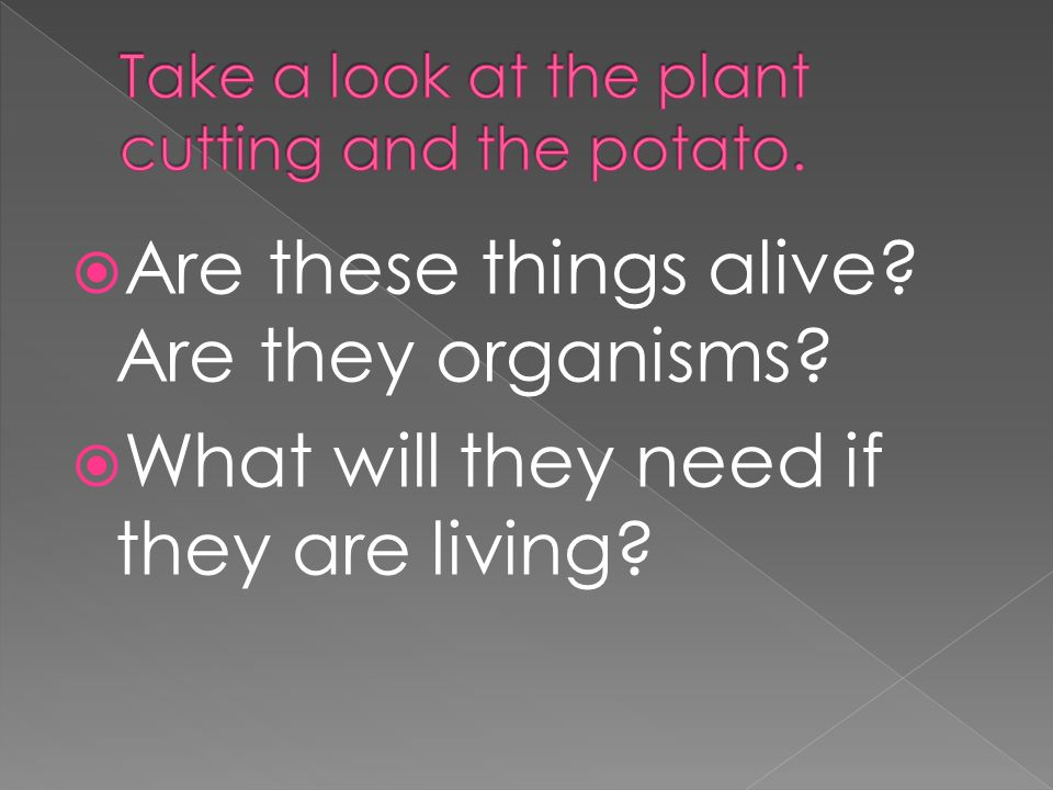 Take a look at the plant cutting and the potato.