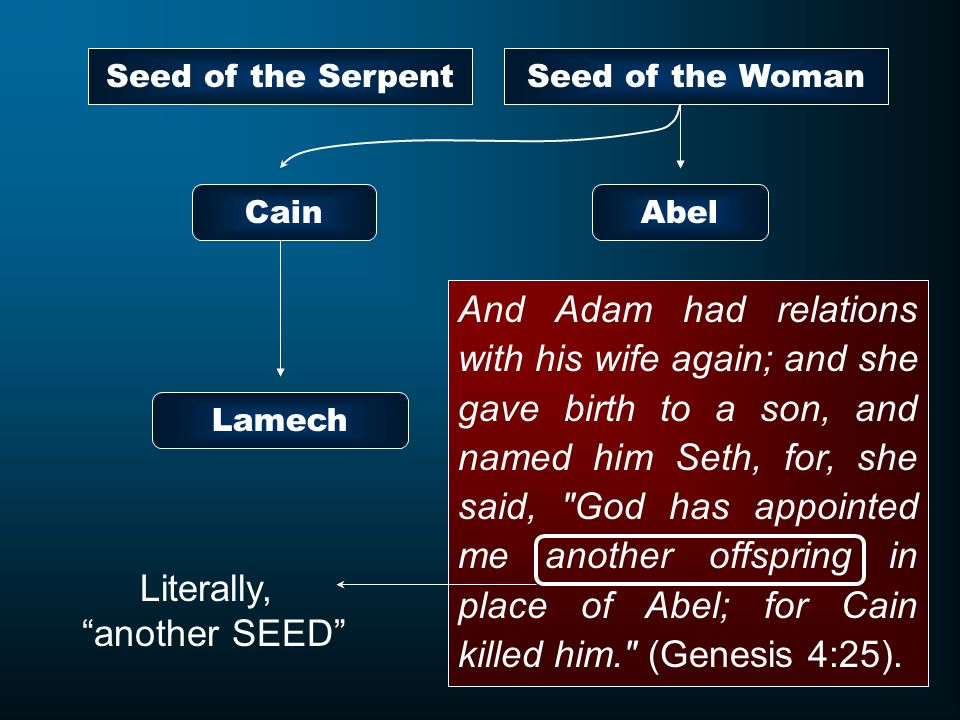 Seed of the Serpent Seed of the Woman. Cain. Abel.