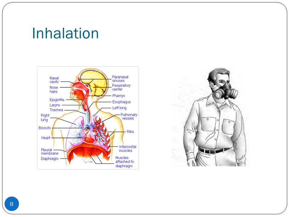 Inhalation Inhalation is a very effective way to get high doses of chemicals into the body.