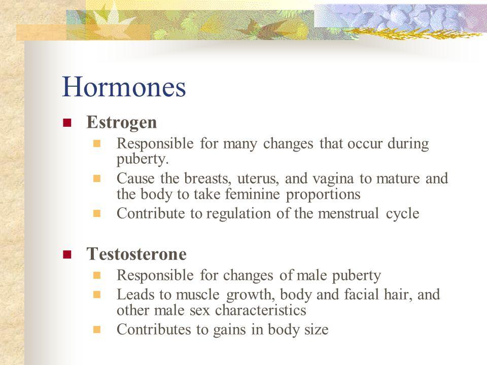 Hormones Estrogen Testosterone