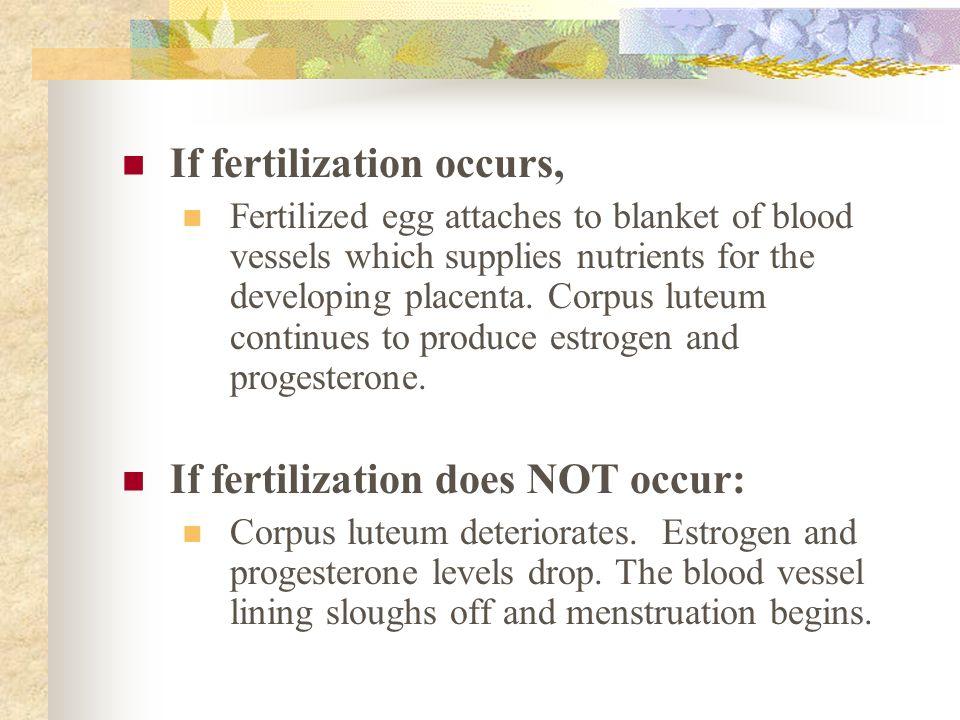 If fertilization occurs,