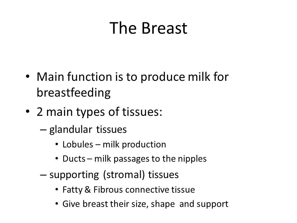 The Breast Main function is to produce milk for breastfeeding