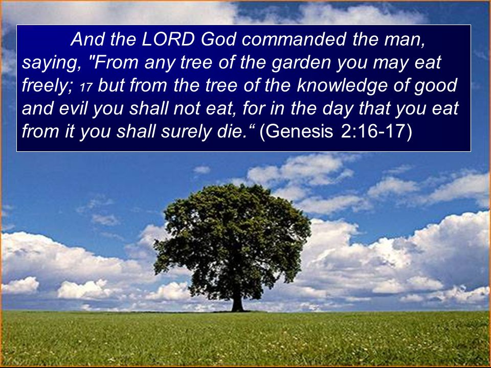 And the LORD God commanded the man, saying, From any tree of the garden you may eat freely; 17 but from the tree of the knowledge of good and evil you shall not eat, for in the day that you eat from it you shall surely die. (Genesis 2:16-17)