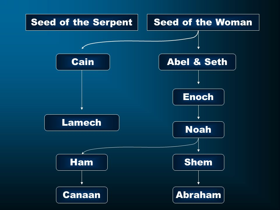 Seed of the Serpent Seed of the Woman Cain Abel & Seth Enoch Lamech Noah Ham Shem Canaan Abraham