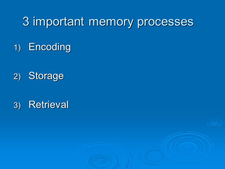 3 important memory processes