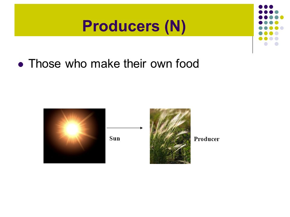 Producers (N) Those who make their own food Producer Sun