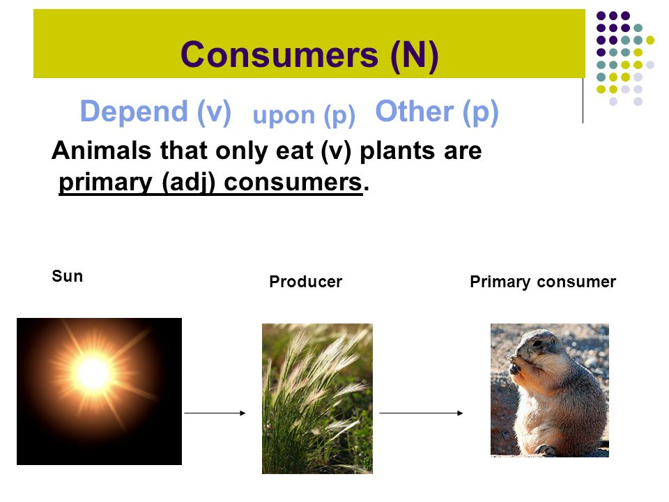 Consumers (N) Depend (v) Other (p) upon (p)