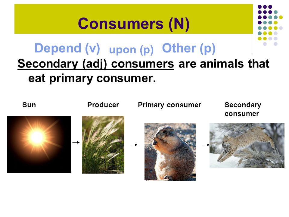 Consumers (N) Depend (v) Other (p)