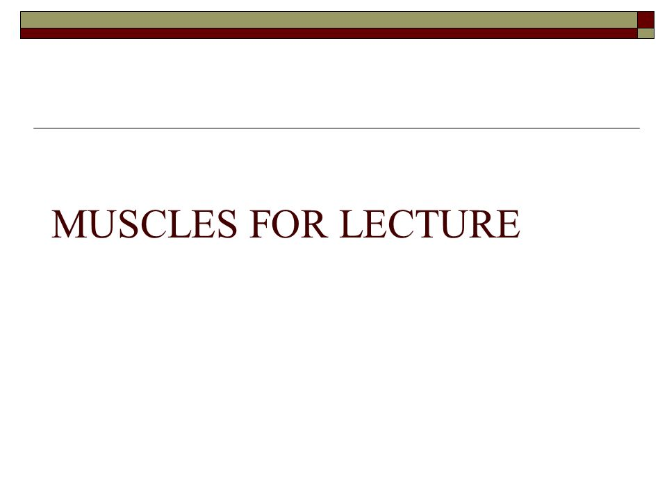 MUSCLES FOR LECTURE