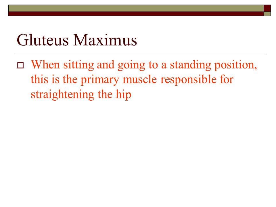 Gluteus Maximus When sitting and going to a standing position, this is the primary muscle responsible for straightening the hip.